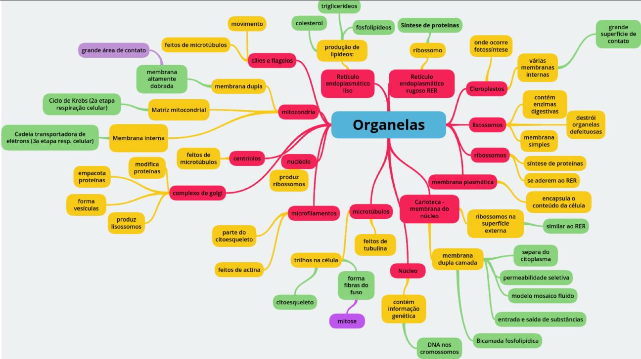 Mapa mental das organelas celulares
